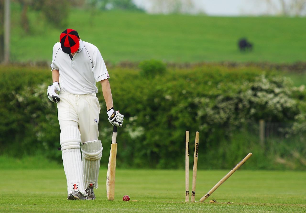 cricket-724616_1280.jpg