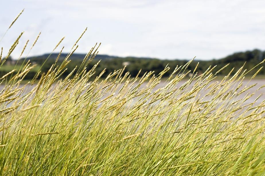 grasses-419891_1280