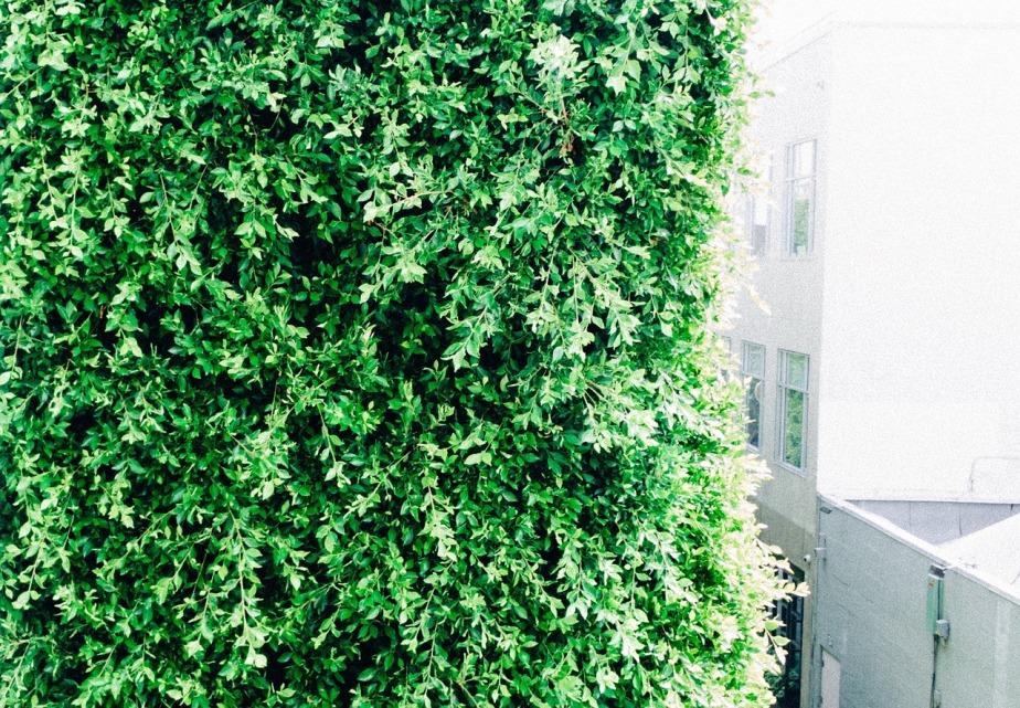 green-923896_1280